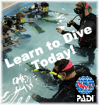 Learn to become a PADI Open Water Diver at Aquatic Realm Scuba Center